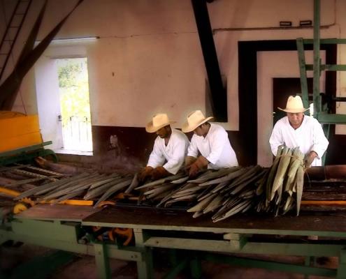 Tour Hacienda Sotuta de Peón