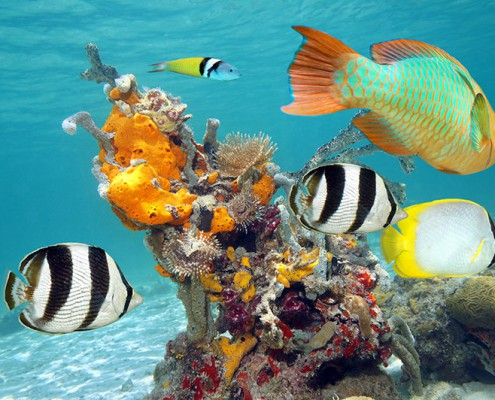 Cancun reefs