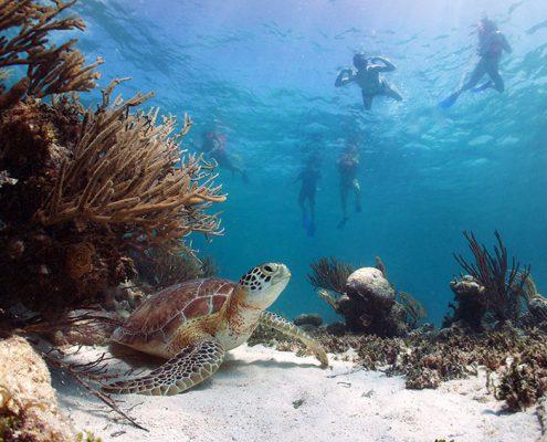 Snorkeling trips in Akumal Quintana Roo