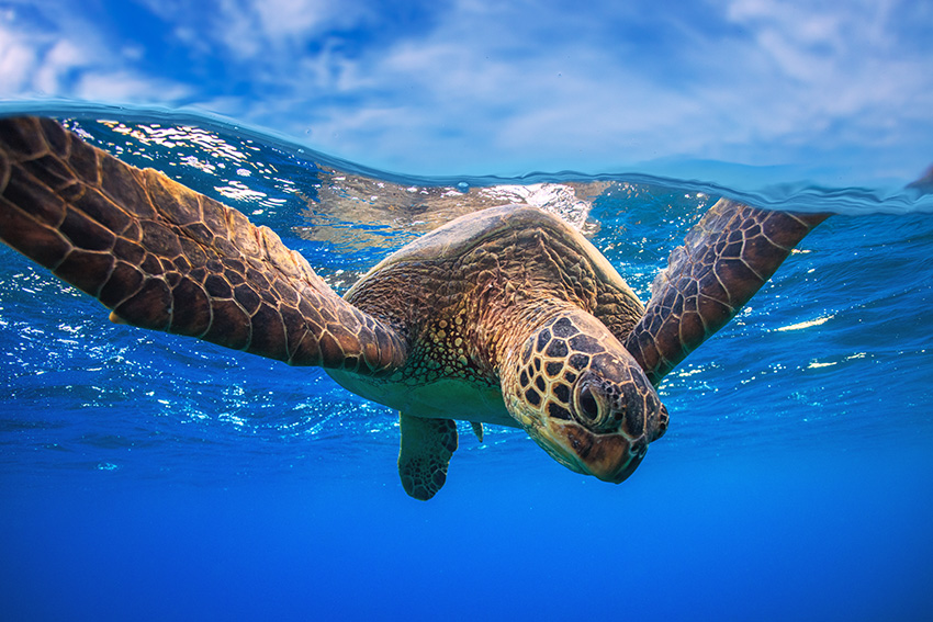 33a9635073d1 Royal Resorts gears up for sea turtle season in the Mexican ...