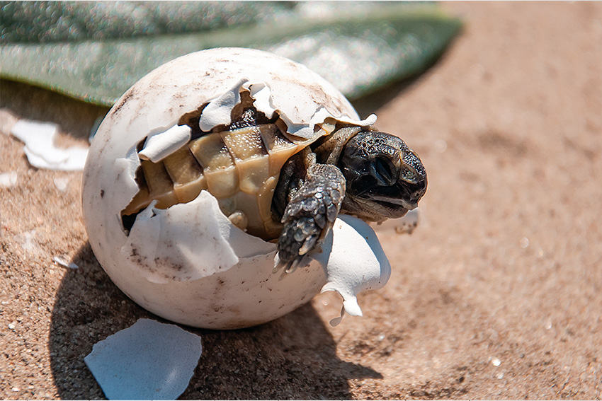 2a65e8b25f17 First turtles of the 2019 sea turtle nesting season in Cancun ...